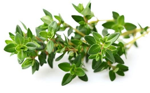 cỏ xạ hương là gì?